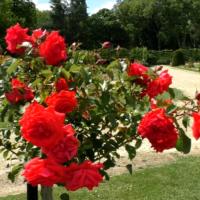 Wandelen door de Rozentuin in het Vrijbroekpark in Mechelen