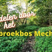 Wandelen door Thiebroekbos