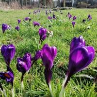 Komt de lente eraan?