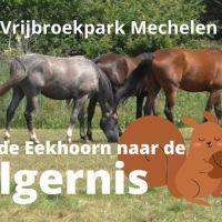 De Eekhoorn en de Wilgernis