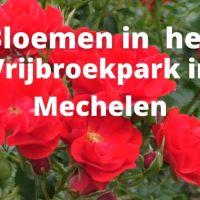 Bloemen in het Vrijbroekpark